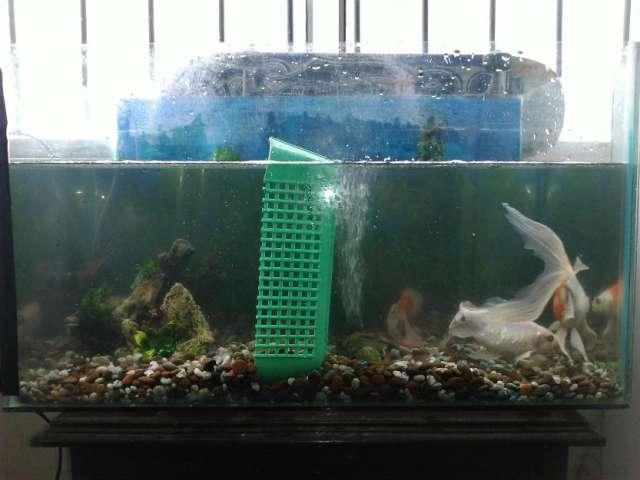 Pecera con peces y salamandra