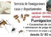 chinche de cama, pulga de perro, chuchuy, pulga de paloma
