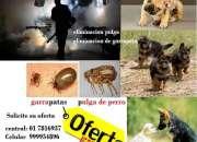 Servicio de fumigacion, fumigaciones de casas, exterminio de pulga de perro