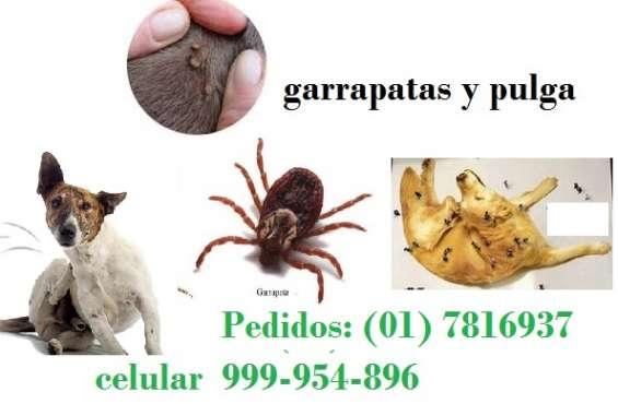 Fumigacion de pulga y garrapata
