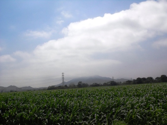 Se vende excelente terreno agrícola en esquivel huaral