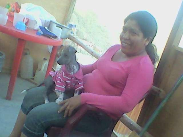 Se vende perrita de raza peruana