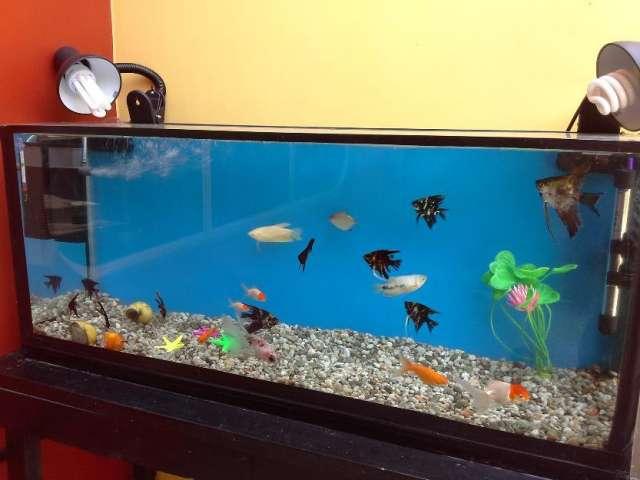 Pecera acuario super oferta