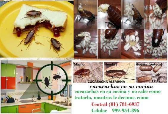 Cucarachas de cocina