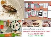 fumigaciones de casas en san borja, empresa de fumigacion en san borja